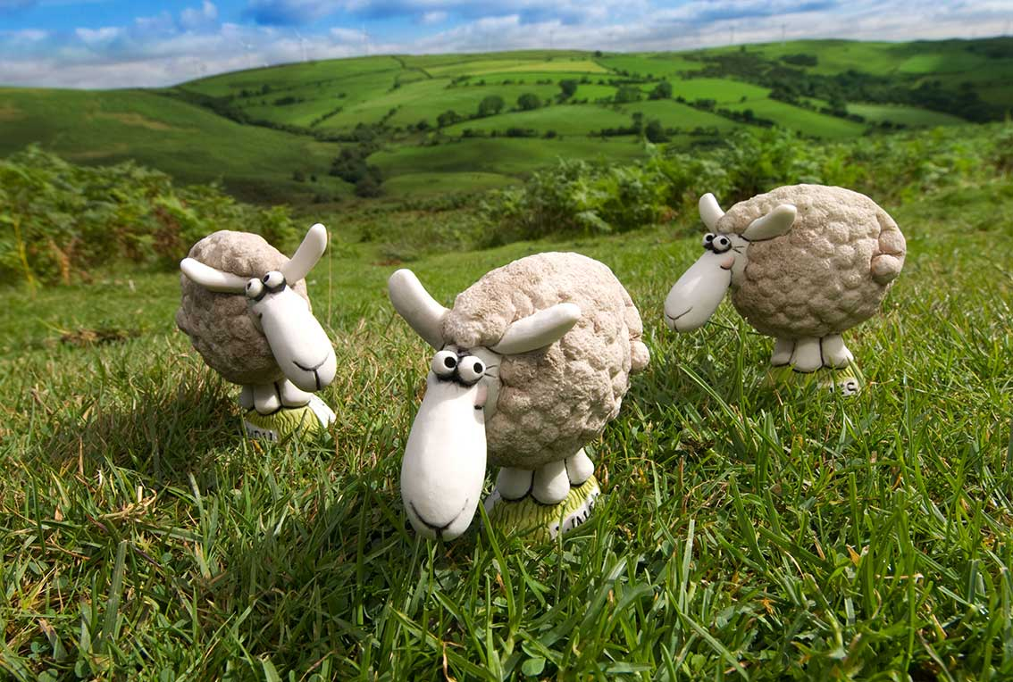 Grogg-Sheeps